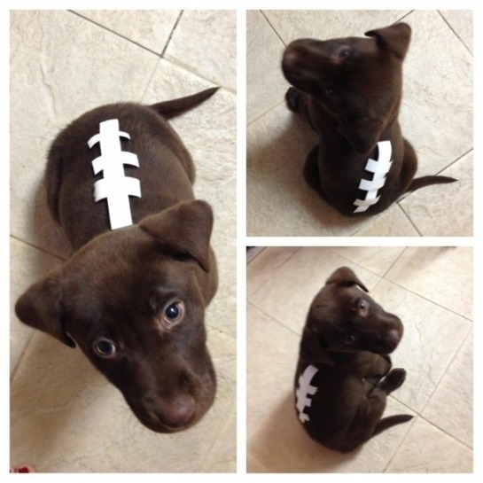 Super Bowl dog